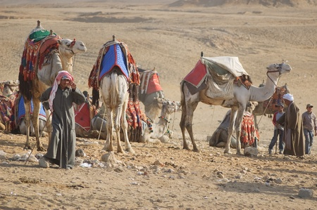 Egypt, 2010, Bedouins and camels in desert