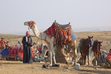 Egypt, 2010, Bedouin and camel in desert