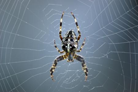 Spin in web vooraanzicht