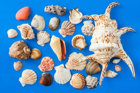 Collection of cockleshell on the blue background Stock Photo
