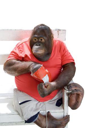 bulge: Monkey eating chips, isolated on white