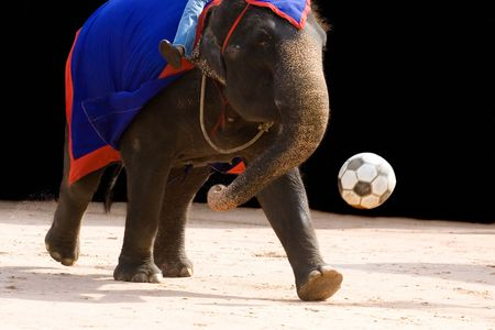 circus elephant: An elephant playing footbal with large ball