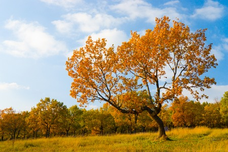 A photo of lonely tree in the autumn