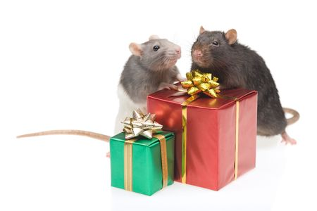 Two rats with a gift box, isolated on white Stock Photo