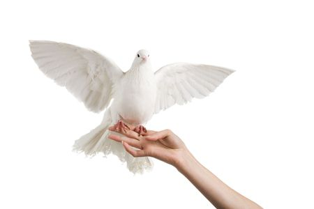 A photo of a dove on a womans hand Stock Photo