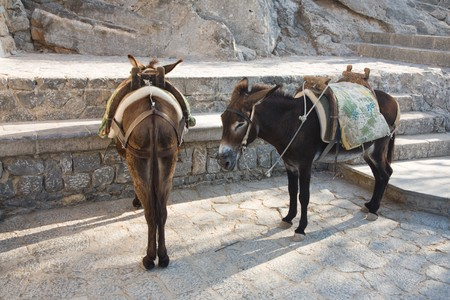 Two donkeys standing in Lindos, Rhodes island, Greece  photo
