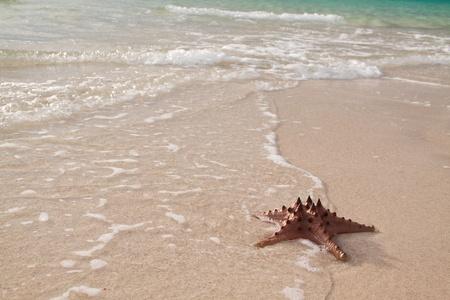 Photo of a starfish on the beach photo