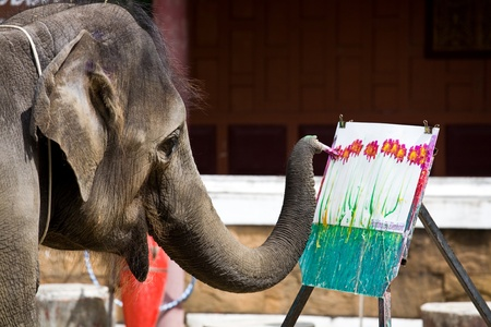 Photo of an elephant painting a picture Stock Photo