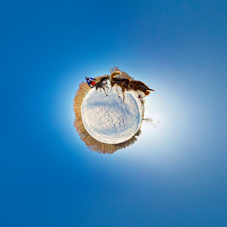 dog sled: dog sled team stereographic little planet