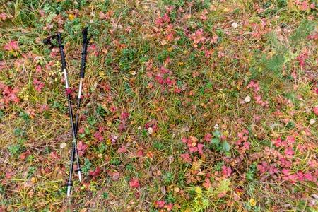 trekking pole: trekking pole on a yellow autumn grass and leaves Stock Photo