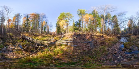 equirectangular: Spherical panorama 360 degrees 180 river stream in the forest and a fallen tree. vr content.