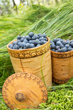 Berry Blueberries in wooden box of tuesok against forest background.