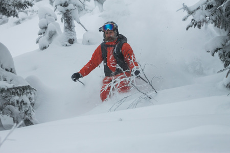 Skier freerider rides from powder snow on background of forest and mountains. Фото со стока