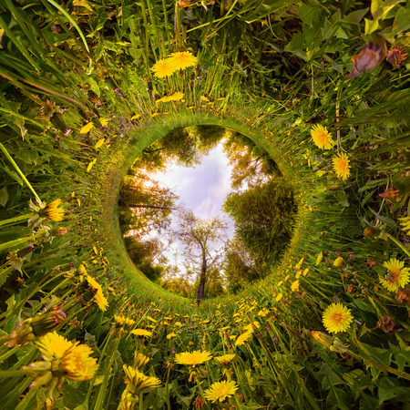Field of yellow dandelions in the green forest at sunset. Tiny Little Planet.