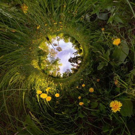 Field of yellow dandelions in the green forest at sunset. Tiny Little Planet. Фото со стока - 103905788