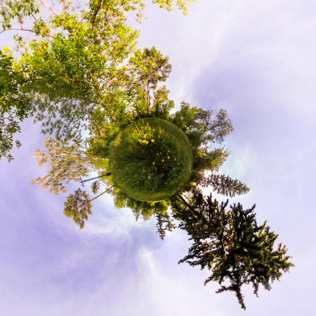 Field of yellow dandelions in the green forest at sunset. Tiny Little Planet. Фото со стока - 103905789