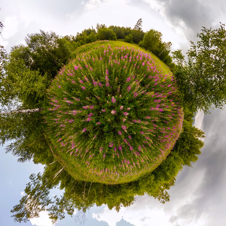 Field of willow-tea on a cloudy day. Tiny planet spherical 360 panorama Фото со стока
