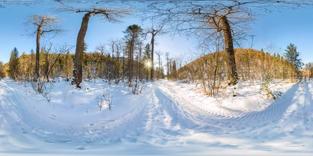 Road in the winter forest at dawn. Spherical 360 VR 180 panorama.