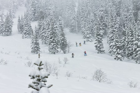 Freeriders skiers group skitur uphill in snow in winter forest Фото со стока