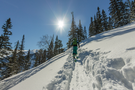 Male skier freeride skitur uphill in snow in winter forest.