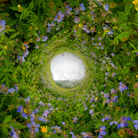 Field of willow-tea on a cloudy day. Spherical 360-degree vr panorama. Tiny planet 360vr panorama. Фото со стока