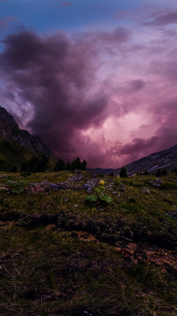 green rhubarb plant in the mountains against the backdrop of purple clouds at sunset. Panorama. Фото со стока
