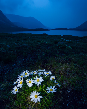 daisies in the foreground in the evening against the backdrop of the night mountains. Night landscape