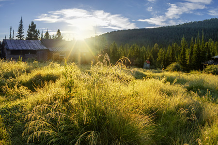 Grass on the field in the dew with village houses at dawn Фото со стока