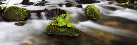 Panorama of nature in the river stone covered with moss and green grass Фото со стока - 126055602