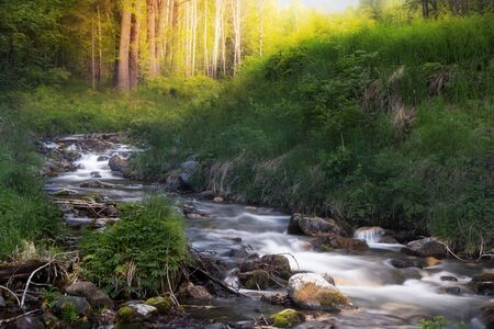 The river flows in the forest at sunrise among green grass and bushes in summer Фото со стока - 126055606