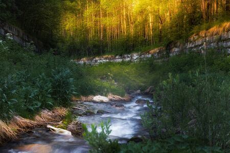 The river flows in the forest at sunrise among green grass and bushes in summer Фото со стока