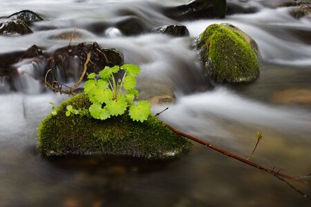 nature in the river stone covered with moss and green grass