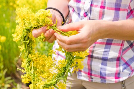 womans hand weaves a wreath yellow colza field in the morning.