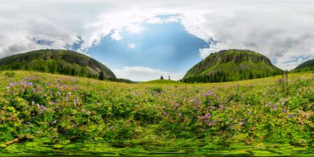 Field of blue flowers in the mountains on a cloudy day. Spherical 360-degree vr panorama.