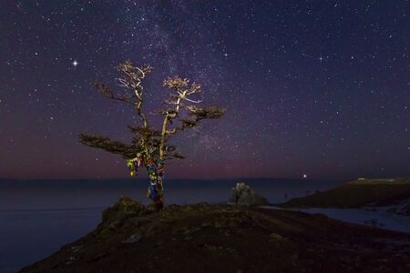 sacred tree under the starry sky with the Milky Way, on the shore of the Olkhon island of Lake Baikal