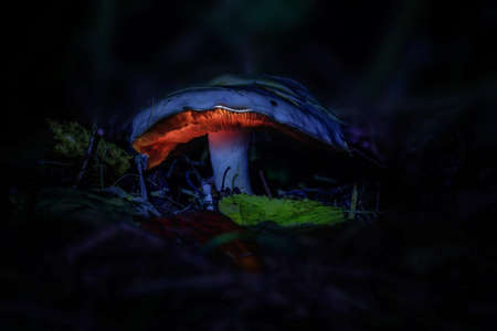 glowing mushrooms in a dark forest, growing on a stump in a fantasy forest, beautiful magic light of a mushroom, macro photography