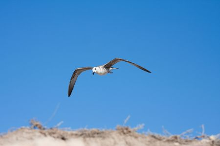 seagull bird photo