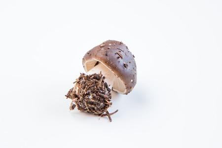 fungous: Boletus mushroom Stock Photo