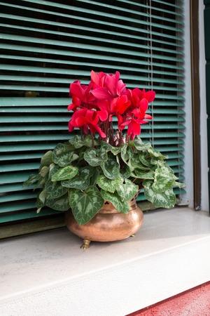 idyllic: idyllic window with flower