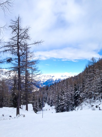 winter snow covered fir trees at the  mountains on blue sky background. photo