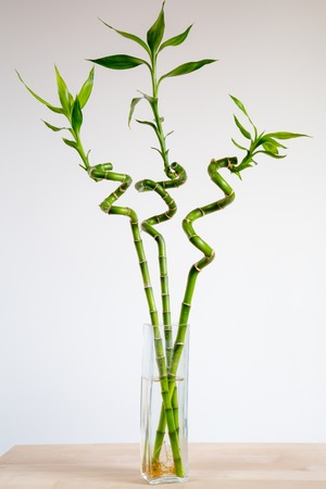 Three bamboos in vase standing on the wooden table