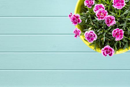 flor violeta: Turquesa fondo de madera con tablones Vista superior de la baya de color p�rpura de mini clavel flor del clavel con gotas de agua en el colorido florero. Lugar para el texto