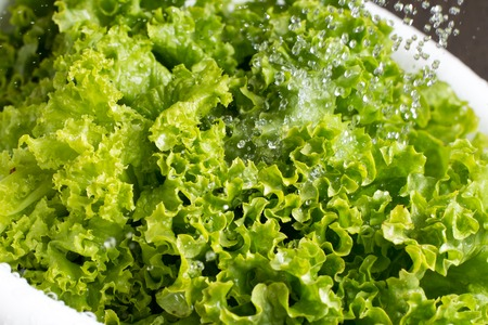 freezed: Fresh vibrant green lettuce rinsed with water in the white colander Stock Photo