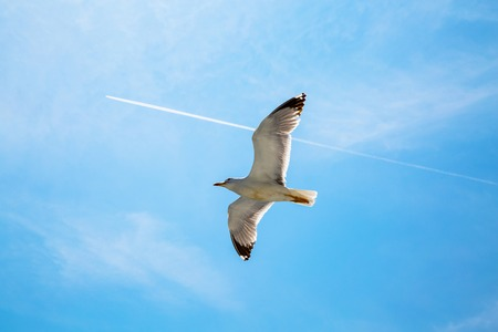 vogelspuren: Wei� contrail Spur von dem Flugzeug und M�we auf den blauen Himmel fliegen eine Richtung. Konzept-Hintergrund mit Copypaste. Fliegen hoch zusammen reisen
