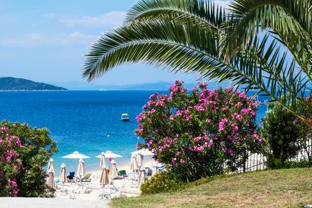 jardines con flores: Ramos Rosa flores de adelfa playa con sombrillas y el mar azul. Fondo Copyspace vacaciones verano con el lugar para el texto. Foto de archivo