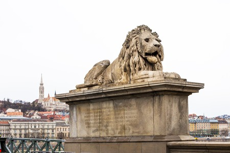 buda: Lion statue at the Chain bridge Budapest Hungary. Buildings of Buda part on the background