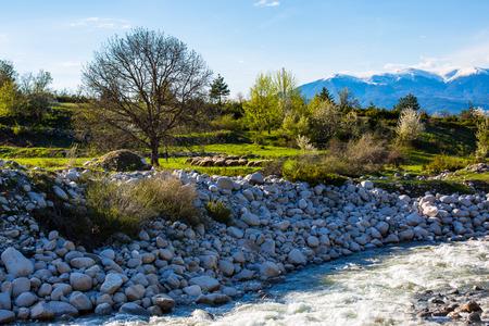 sprung: Spring has sprung. Vibrant green trees, river, sheeps. Snowy mountains far away. Spring background