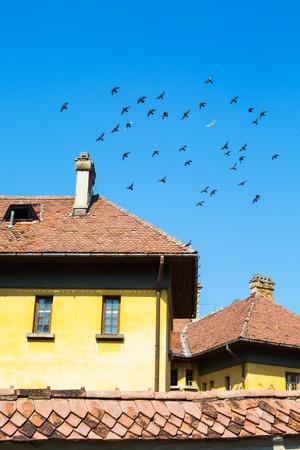 palomas volando: Bandada de palomas que vuelan sobre la azotea del edificio antiguo en Brasov, Rumania