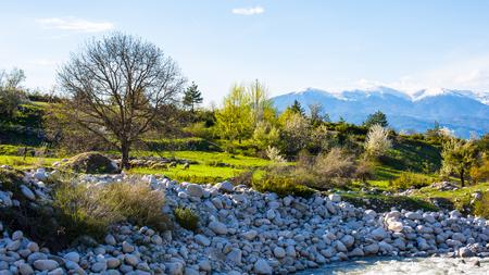 sprung: Spring has sprung. Vibrant green trees, sheeps. Snowy mountains far away. Spring background