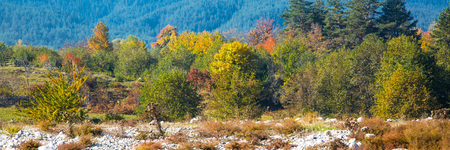 far away: Vibrant autumn panorama background with colorful green, red and yellow trees and pine trees  far away